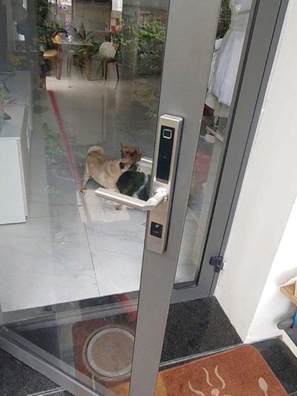 Lắp khóa vân tay cửa nhôm kính xingfa tại TPHCM